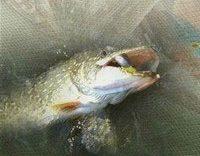 trofeynaya-rybalka
