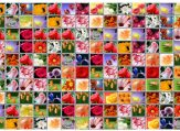 madzhong-cvetochnaya-strana